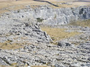 11Limestone pavement